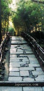 bosque de bambú por Japonesca