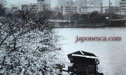 春中の大阪。