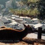 imagenes de japon y cultura japonesa en japonesca. ハポネスカの日本の写真集。