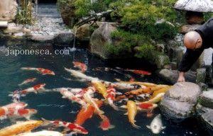 imagenes de Japon